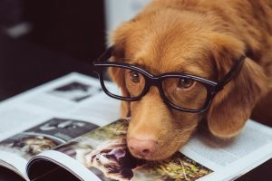 5 Reasons Why We Love Having Dogs in the Office